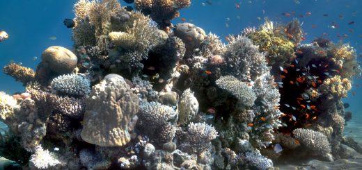 Fehlffarben Unterwasserbilder
