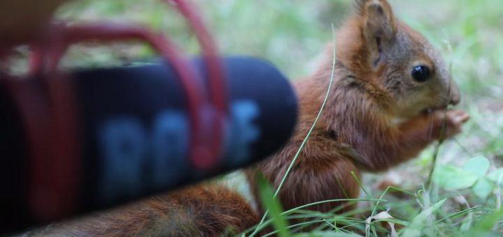 Eichhörnchen ASMR